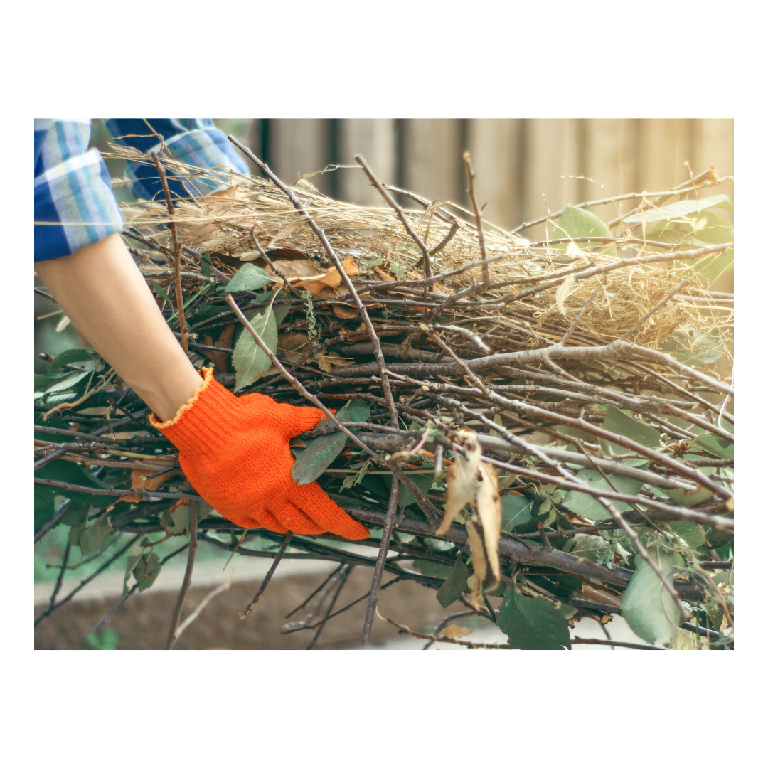 How to Preserve Your Garden During the Winter: Cleaning the Garden