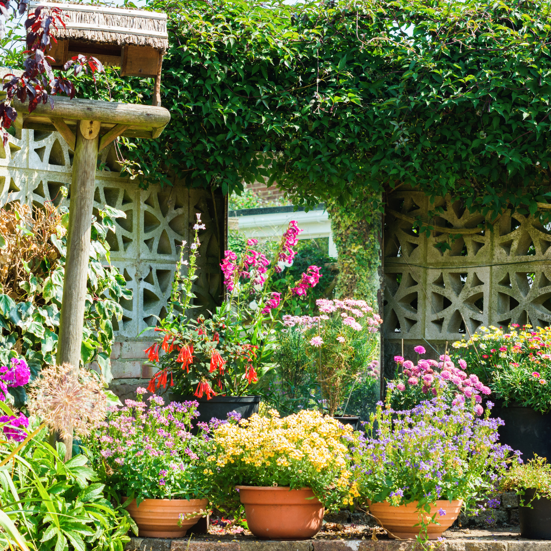 How to Preserve Your Garden During the Winter: New Space