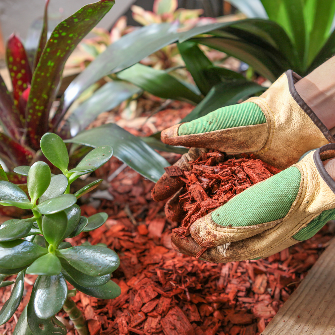 How to Preserve Your Garden During the Winter: Putting in Mulch