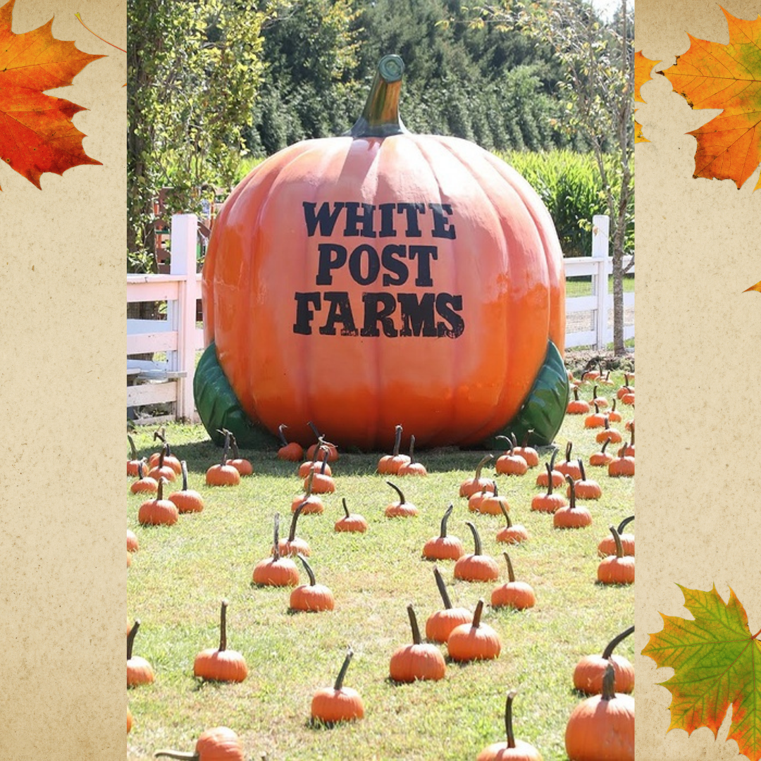 Best Spots to Go Pumpkin Picking in New York: White Post Farms