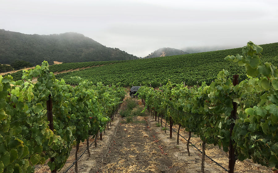 Spanish Springs Vineyard in San Luis Obispo
