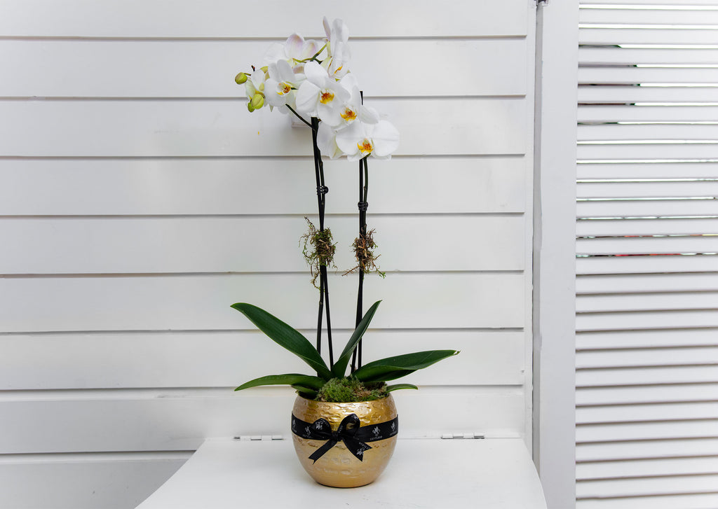tesso Orchids