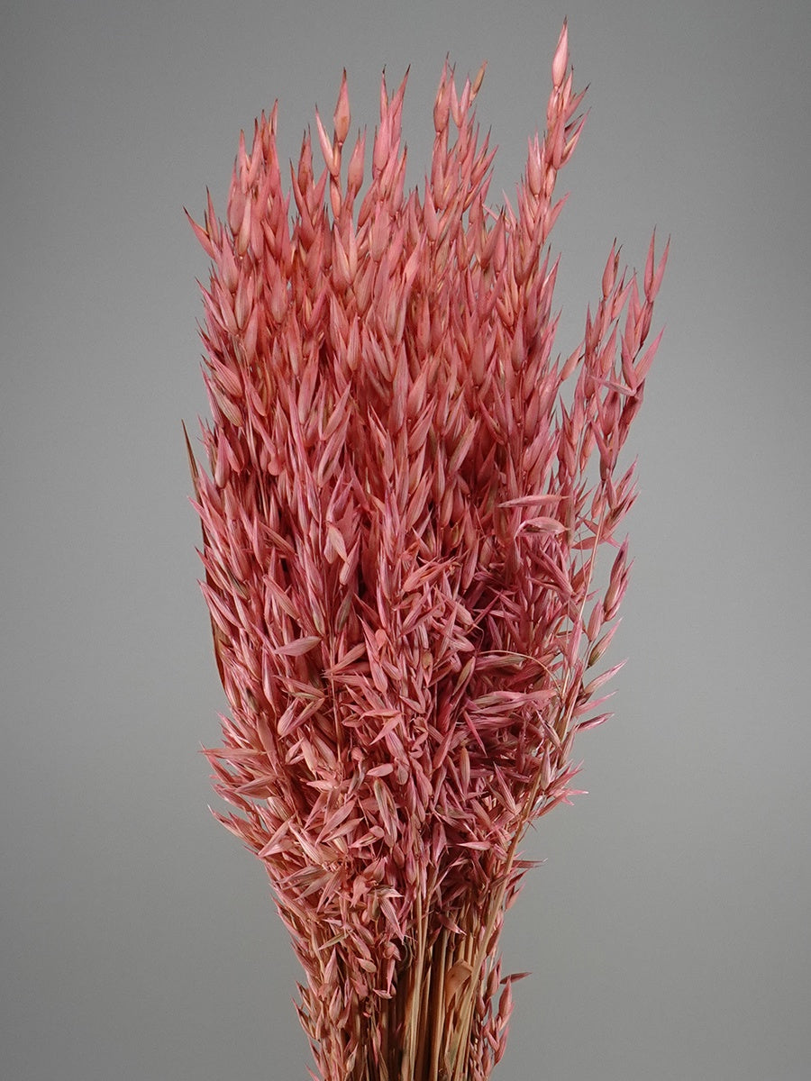 Dried  Avena Light Pink