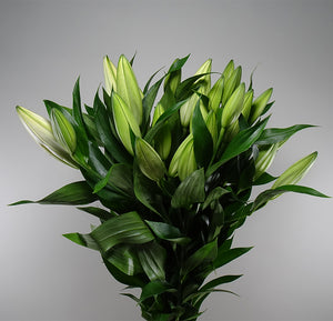 Subscription Lily Casablanca White