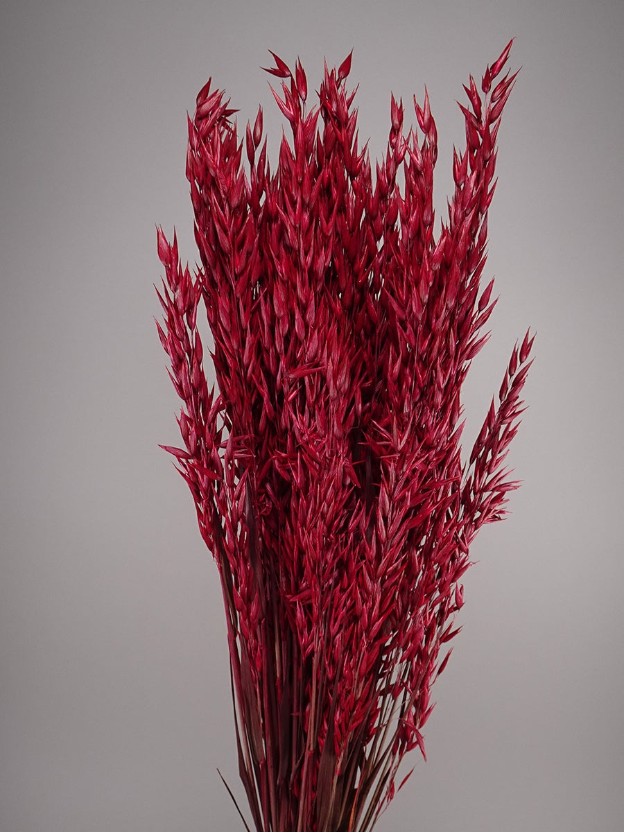 Dried Avena Red