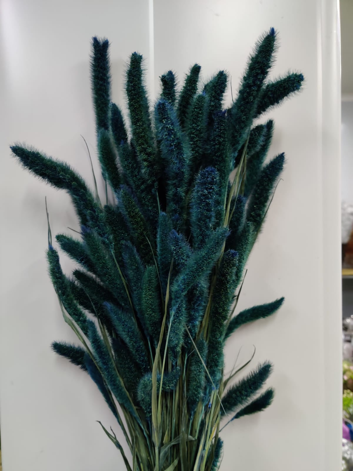Dried Setaria Paint Light Blue