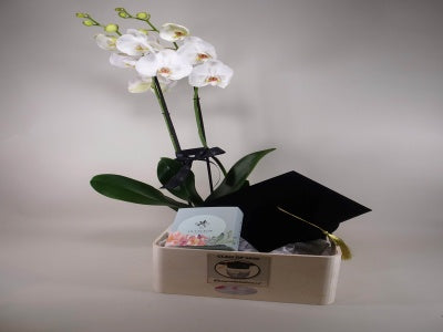 Graduation Orchid BOX