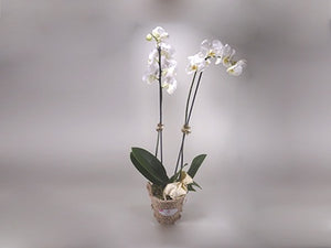 Graduation Basket Orchid