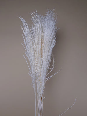 Dried Miscanthus ( Feather ) Collection