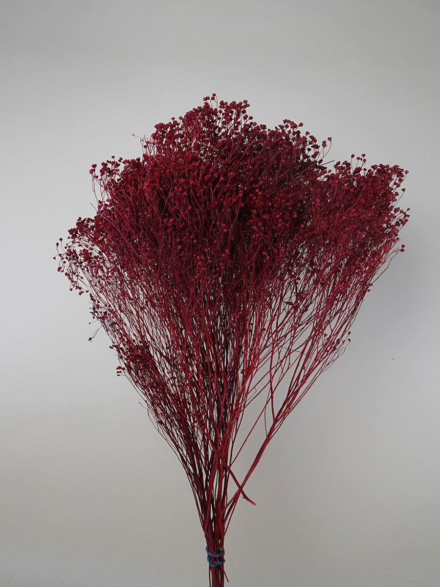 Dried Broom Bloom Collection