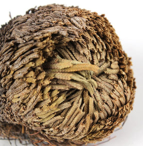 """Rose Of Jericho"" - The Resurrection Plant"