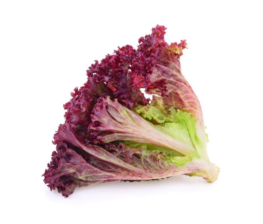 Red Coral Lettuce 300g