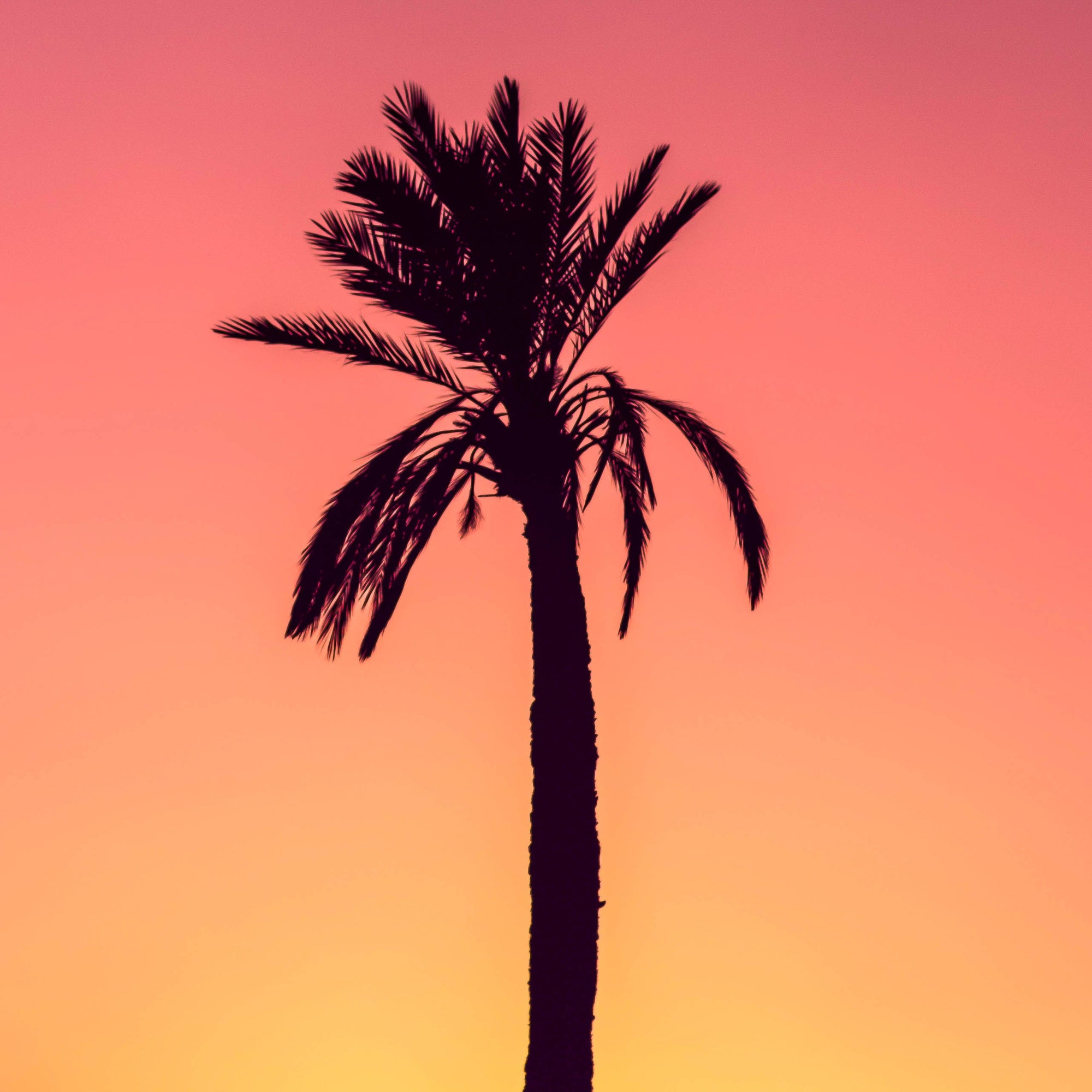Palm Tree | 17: The 4-Hour Workweek Myth | Blake Bauer