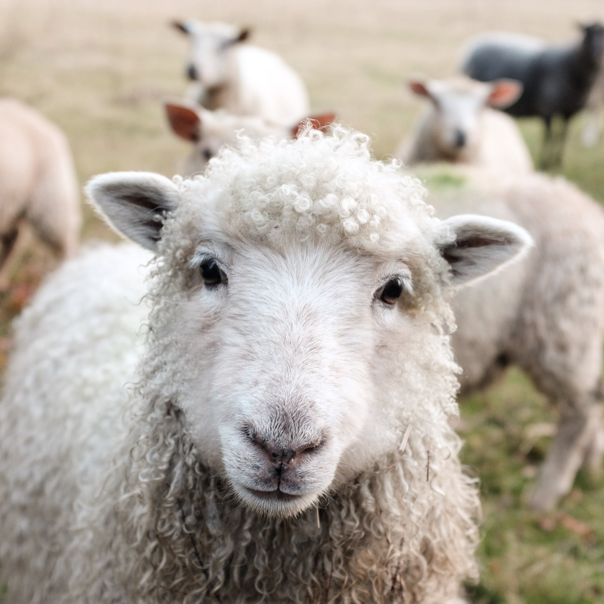 46: Sheep & Scalability | Blake Bauer