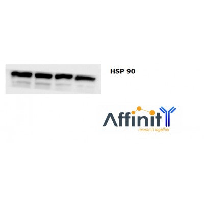 AF0774 staining NIH-3T3 by IF/ICC. The sample were fixed with PFA and permeabilized in 0.1% Triton X-100,then blocked in 10% serum for 45 minutes at 25¡ãC. The primary antibody was diluted at 1/200 and incubated with the sample for 1 hour at 37¡ãC. An  Alexa Fluor 594 conjugated goat anti-rabbit IgG (H+L) Ab, diluted at 1/600, was used as the secondary antibod