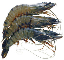 Load image into Gallery viewer, black-tiger-shell-head-on-prawns