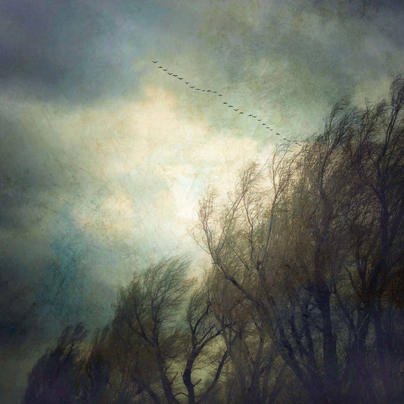 Gloria Feinstein Fine Art Photography Trees And Geese Art Print