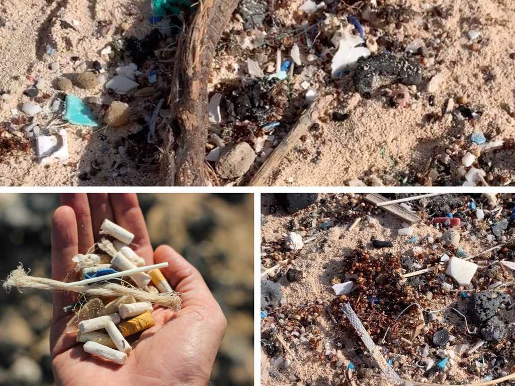 Findings of a beach cleanup