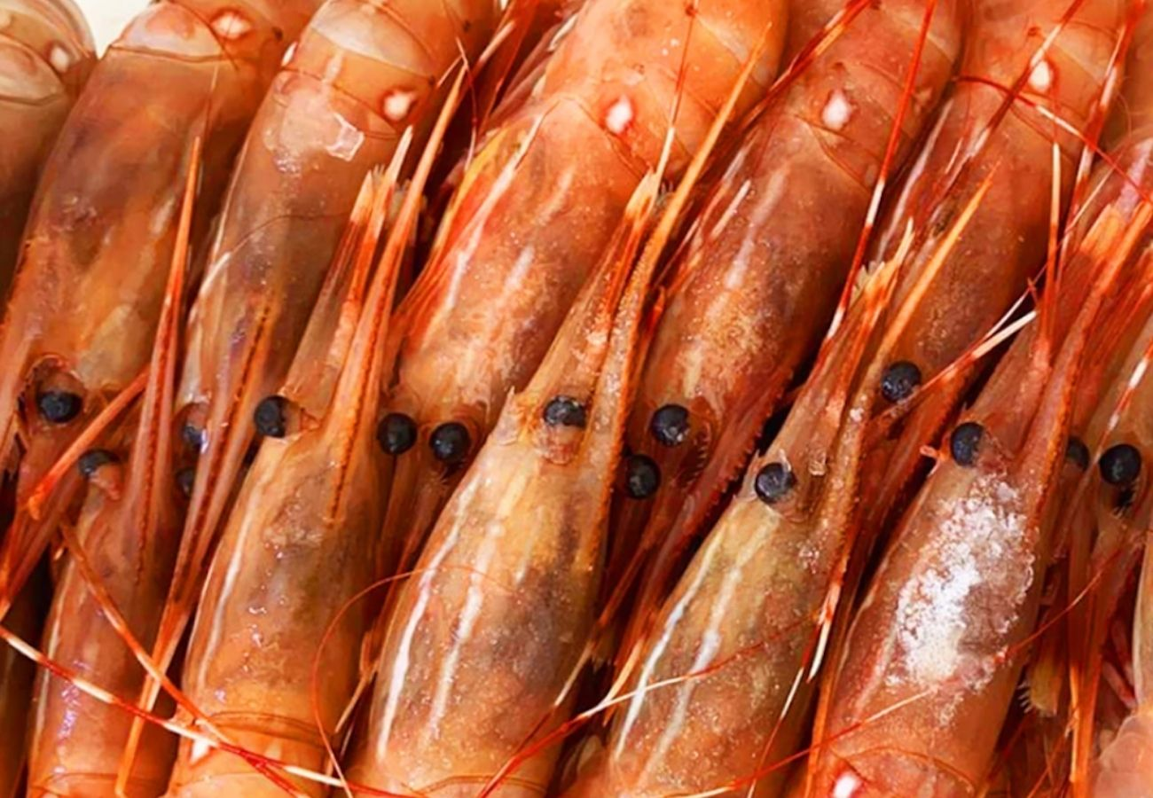 Buy Seafood: Sustainable, Fresh, BC Spot Prawns with Local Delivery| BC Live Spot Prawns & Seafood