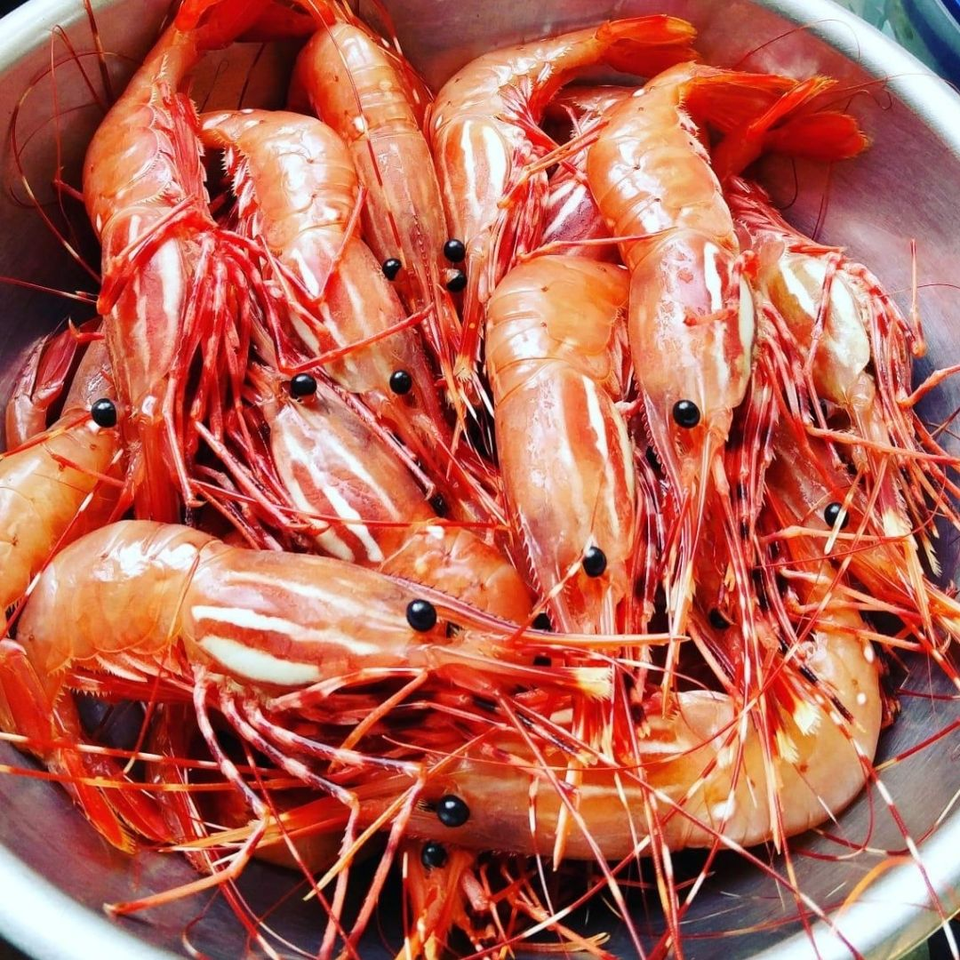 Buy Seafood: Example of fresh prawn catch of BC Live Spot Prawns & Seafood Boat