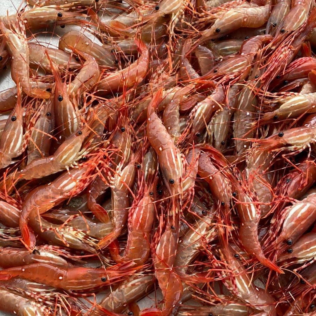 Buy Seafood: Local, Family Owned Fishing Boat Prawn Catch| BC Live Spot Prawns & Seafood