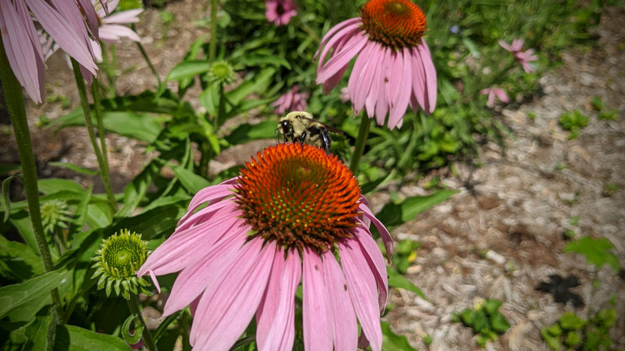 Pollinators are our favorite neighbors