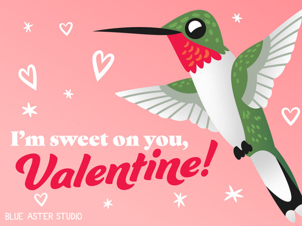 """An illustrated Valentine's day card featuring a hummingbird saying """"I'm sweet on you, Valentine!"""""""