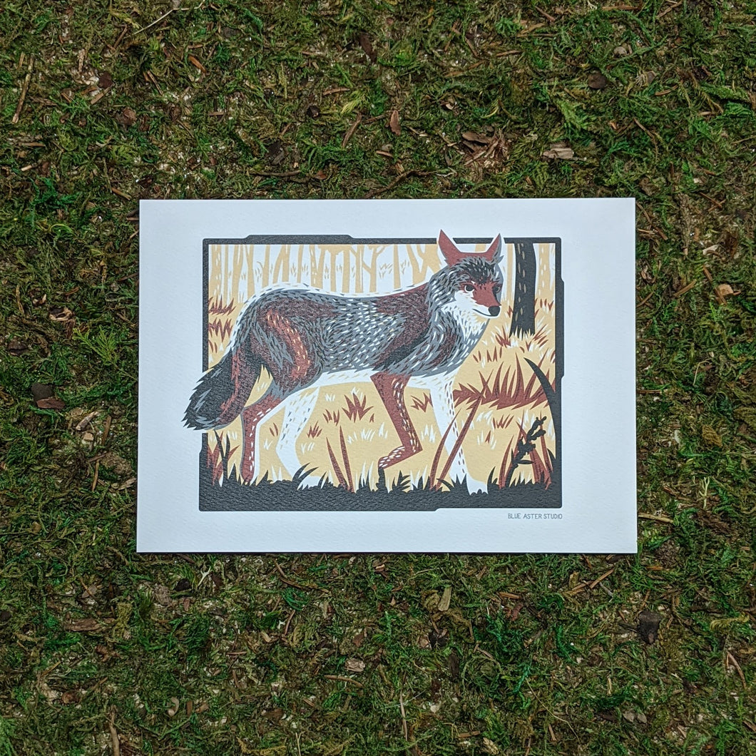 A 5x7 art print of a coyote in the underbrush of a woodland setting. Printed in grays, browns, and black.