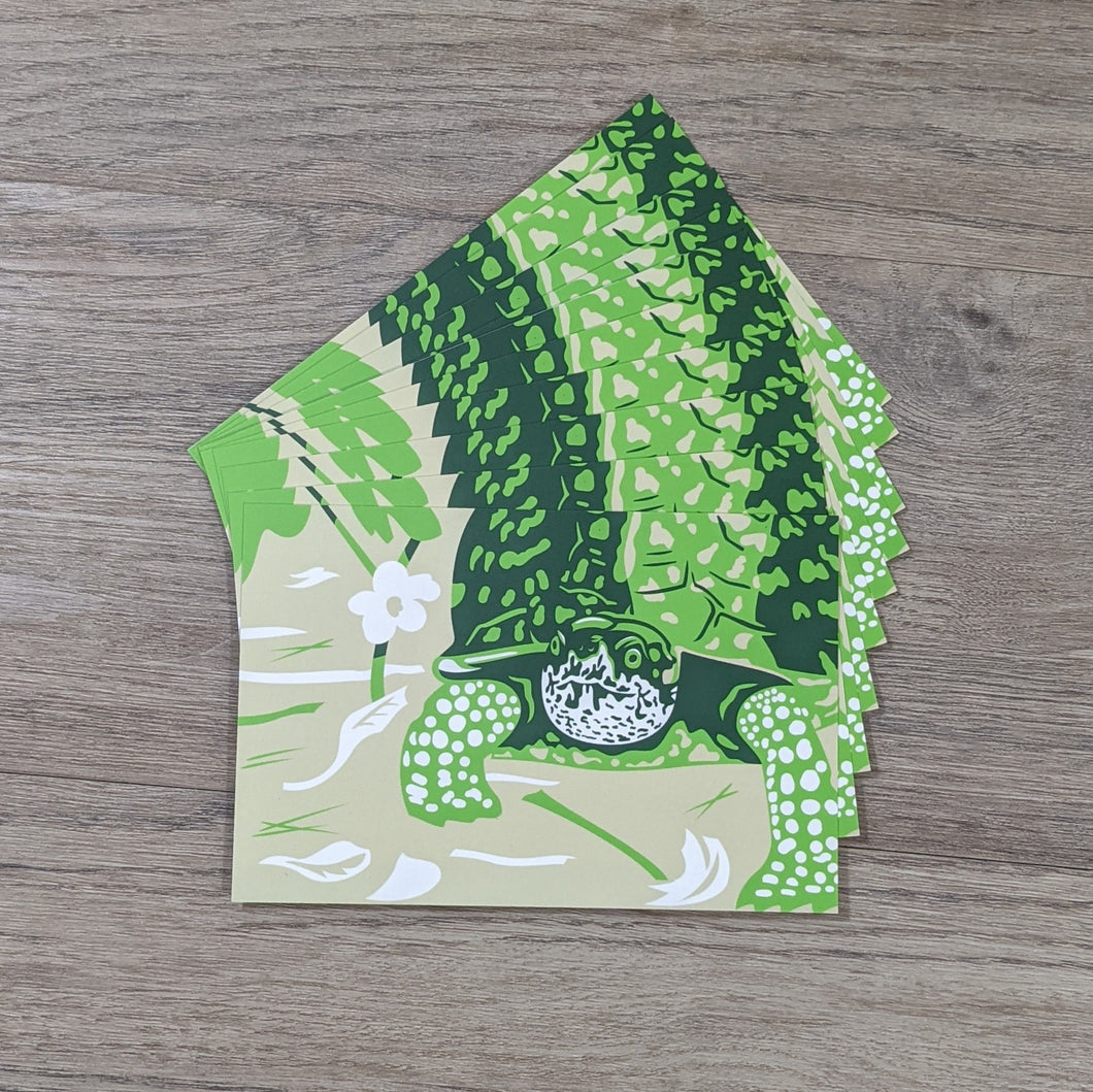 A stack of ten box turtle postcards.
