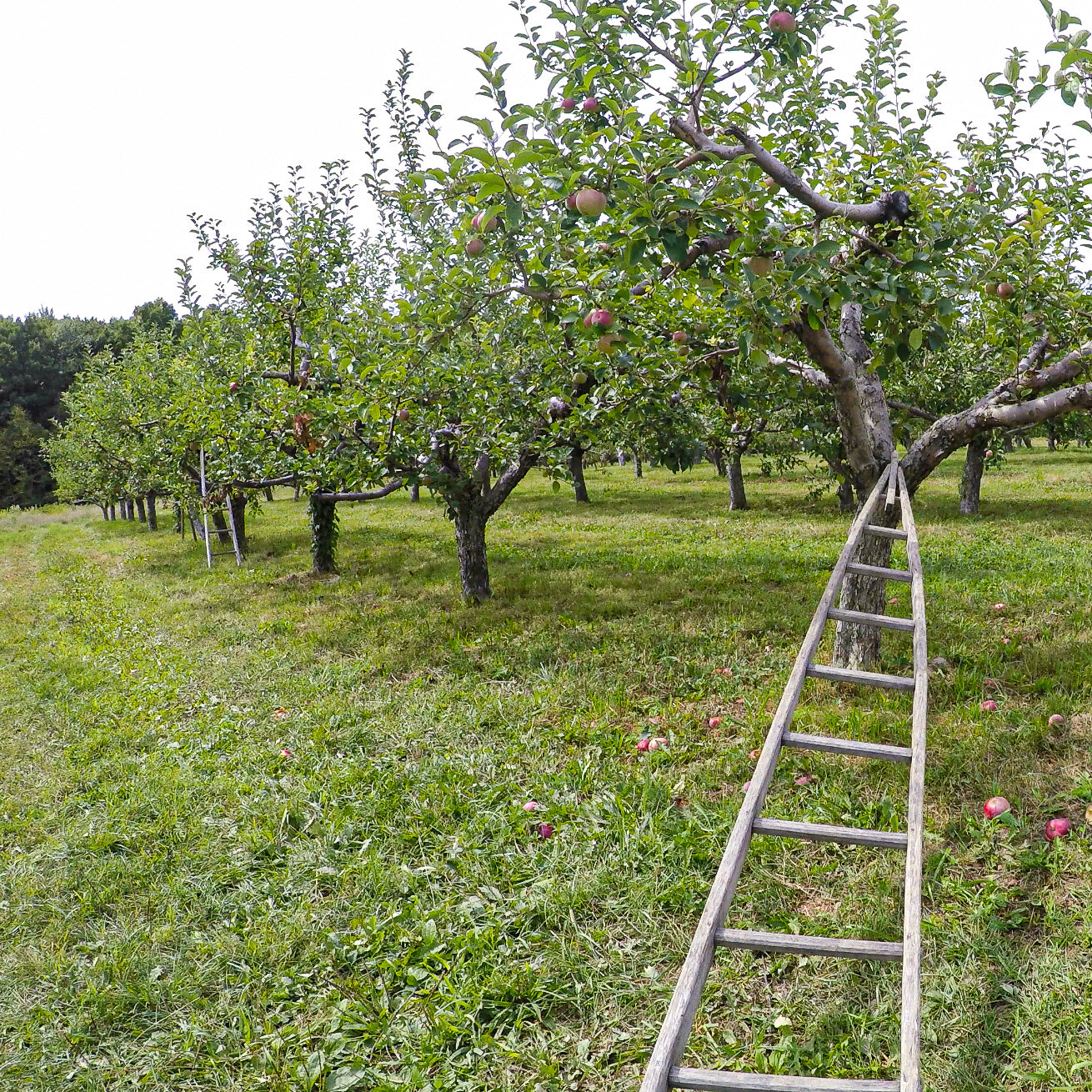 Apple Picking, Cider Drinking, Brick-Oven Pizza Eating Day Trip!