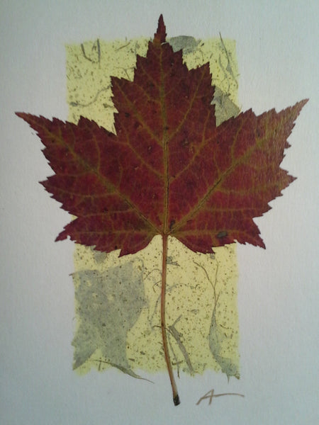 Red Maple - pack of 4 cards