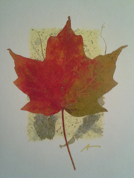 Sugar Maple - pack of 4 cards