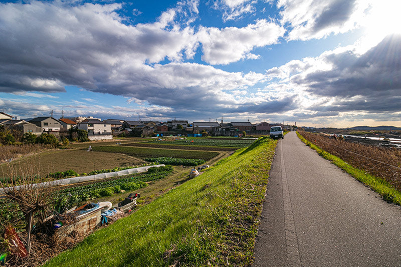 The lovely cycling path between Kyoto and Osaka.