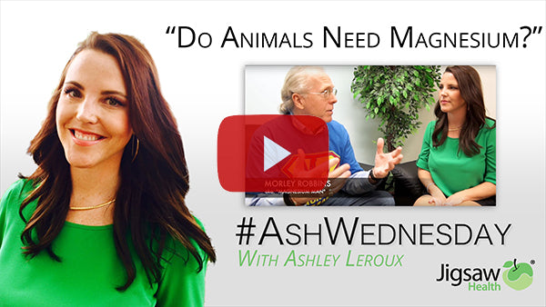 Do Animals Need Magnesium? | #AshWednesday