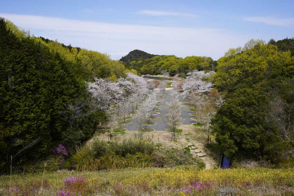 "Tadao Ando's ""Labyrinth of Cherry Blossoms"" is in bloom on Naoshima, with no tourists to see it."
