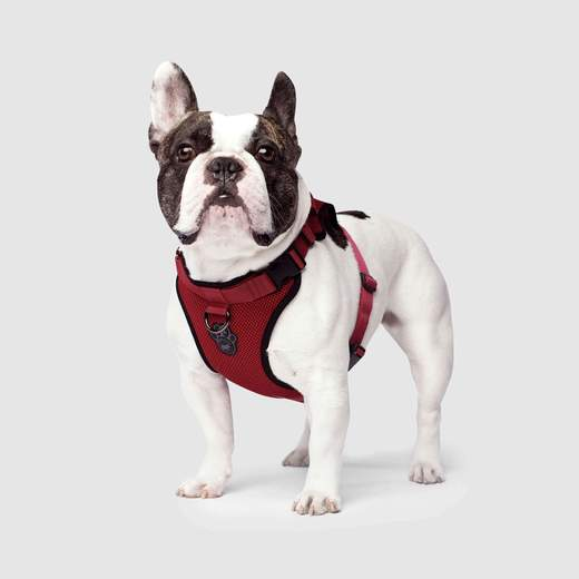 Canada Pooch Everything Mesh Harness Red