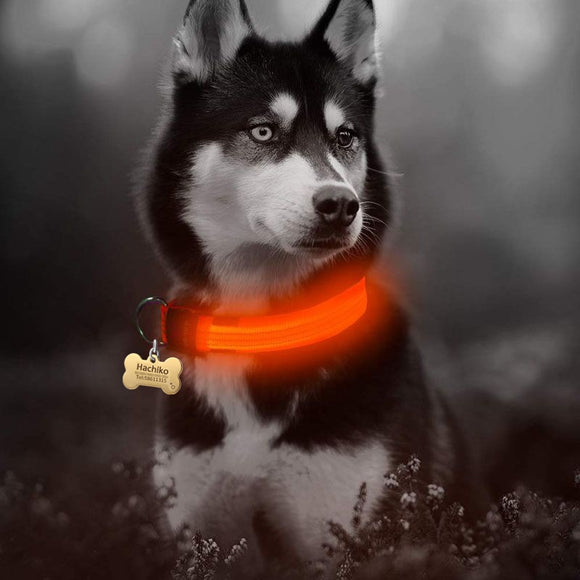 Nylon LED Dog Collar Night Safety Flashing Glow In The Dark Luminous Fluorescent