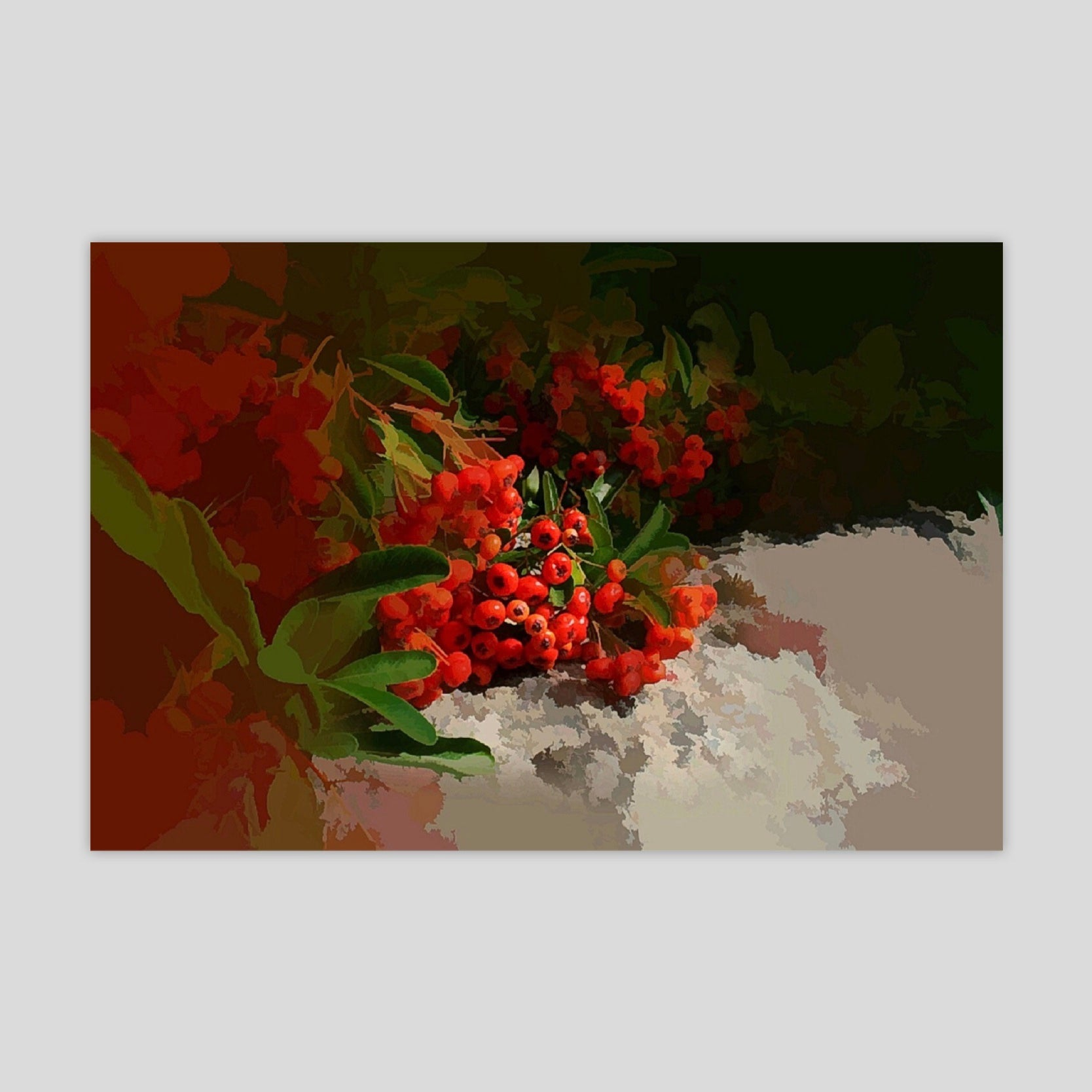 Cotoneaster (2370R)