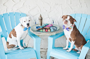 Pitbulls wearing Sirius Republic martingale collars