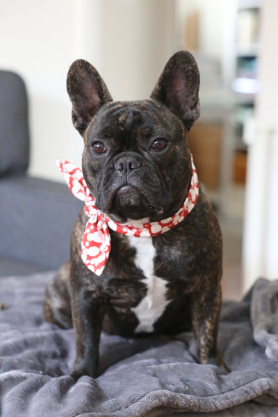 Holiday Neckerchief