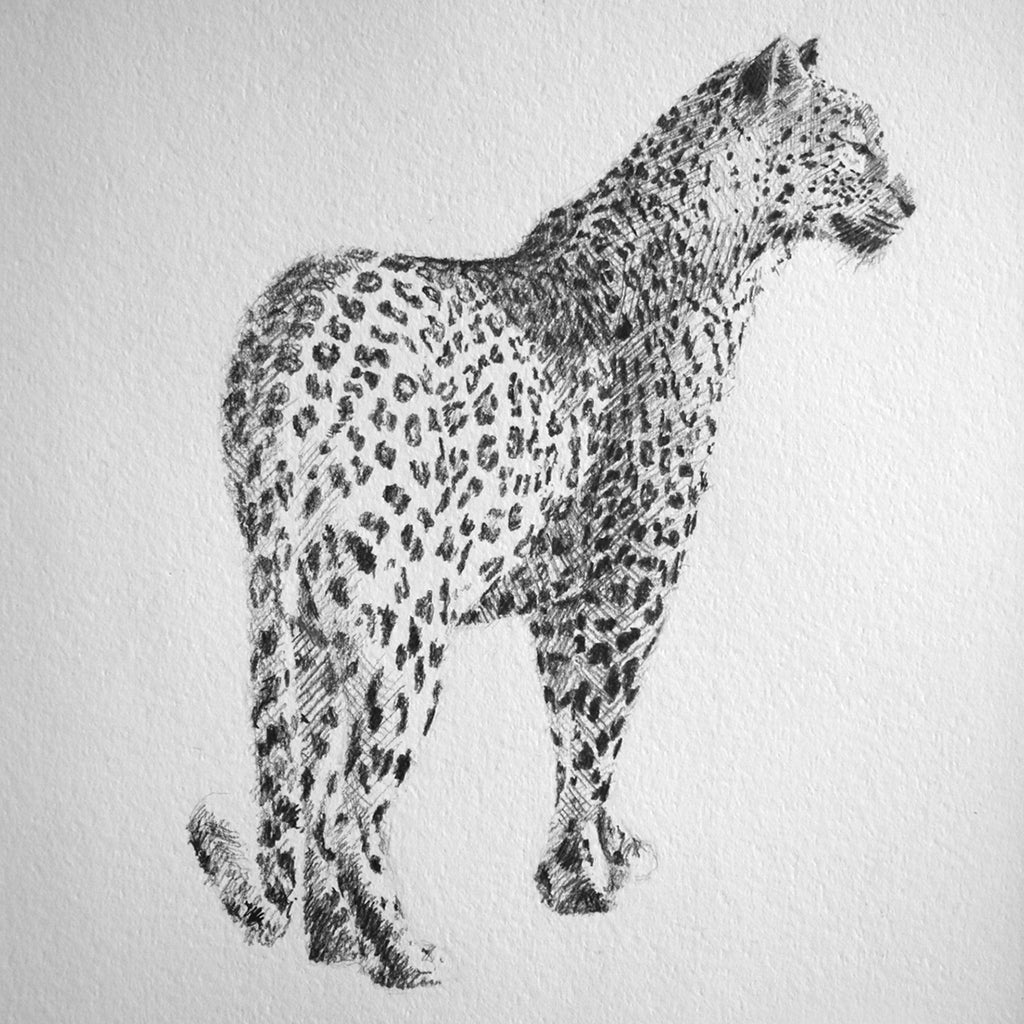 Original Leopard Drawing