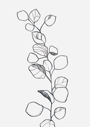 Eucalyptus - Framed Botanical Line Drawing