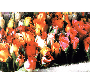 Roses is Wooden 1000 Piece Jigsaw Puzzle Toy For Adults and Kids