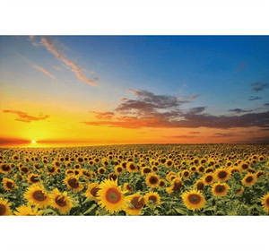 SunFlower Valley is Wooden 1000 Piece Jigsaw Puzzle Toy For Adults and Kids