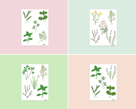 Herb Garden Postcard Pack