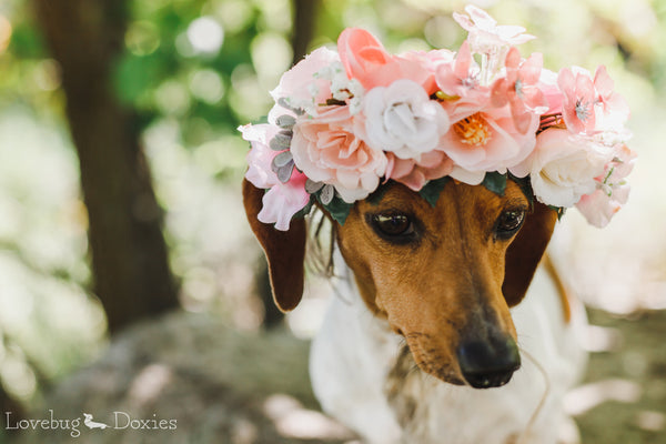 Flower Crown for Dog, Pet Wedding, Dog Floral Wreath, Dog Flower Crown, Dog Photo Shoot, Dog Wedding Flowers, Ring Bearer Puppy Dog, Fur Baby Crown, Puppy Dog, Dog Birthday Photos, Girl Dog Tiara, Dog, Pet Wedding, Custom Order Dog Floral Wreath, Dog Flower Crown, Dog Photo Shoot, Dog Wedding Flowers, Puppy Floral Crown