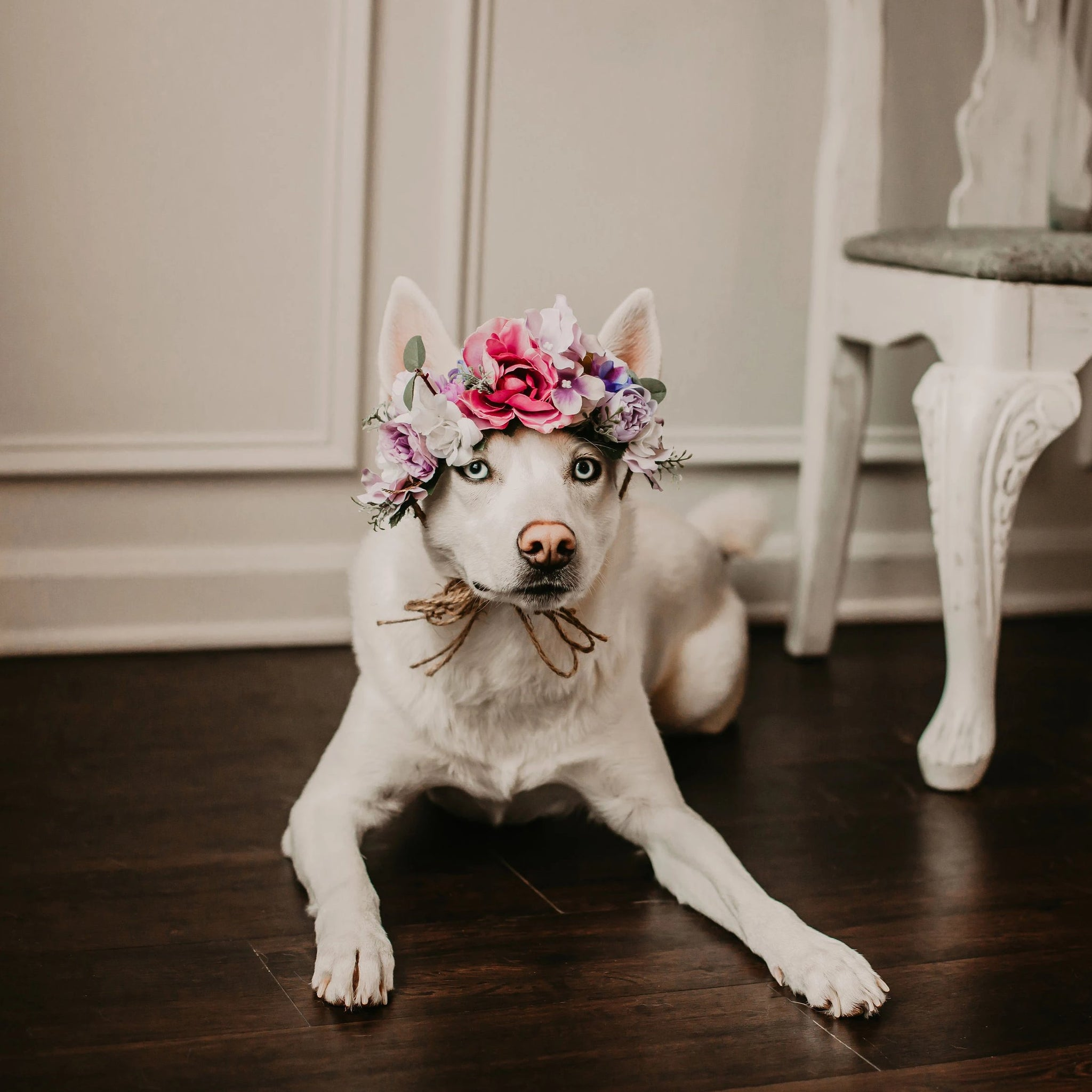 Pet Wedding, Custom Order Dog Floral Tiara, Dog Flower Crown, Dog Photo Shoot, Dog Wedding Flowers, Puppy Floral Crown, Ring Bearer Dog