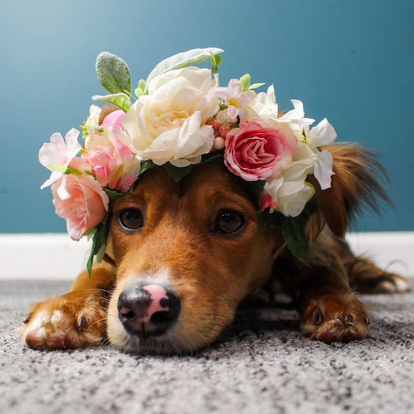 Flower Crown for Dog, Pet Wedding, Dog Floral Wreath, Dog Flower Crown, Dog Photo Shoot, Dog Wedding Flowers, Ring Bearer Puppy Dog, Fur Baby Crown, Puppy Dog, Dog Birthday Photos, Girl Dog Tiara, Dog, Pet Wedding, Custom Order Dog Floral Wreath, Dog Flower Crown, Dog Photo Shoot, Dog Wedding Flowers, Puppy Floral Crown, pink and white, light pink, dark pink