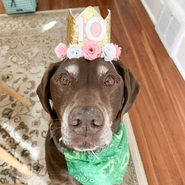 Dog Birthday Crown - Gold & Pink