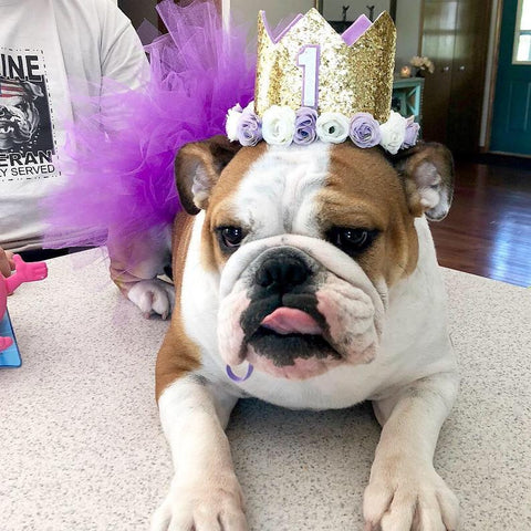 Dog crown, dog party hat, dog birthday crown, dog birthday, pet hat, pet crown, pet accessories, glitter crown, small dog birthday crown, big dog birthday crown, puppy birthday, dog photography, pet photography, dog accessories, dog outfit, dog birthday outfit, pet party crown, large dog birthday party hat, birthday party, first birthday dog, 1st birthday dog, girl puppy birthday, pet name crown, pet clothing, pet supplies, dog birthday photoshoot, cake smash, pet photoshoot